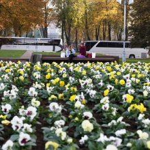 Uostamiesčiui – tūkstančiai rudeninių žiedų