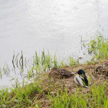 Ežere Biržuose – kraupus radinys