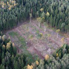 Raseinių rajone vagys iškirto valstybinio miško už 5 tūkst. eurų