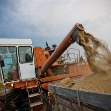 Grūdų kainos šauna aukštyn: derlius mažesnis, kokybė prasta
