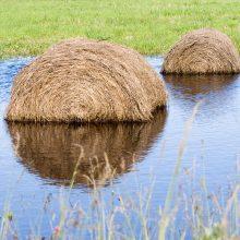 Ūkininkus pasieks kompensacijos už nuostolius, patirtus dėl liūčių