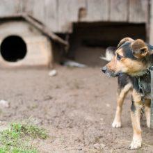 Seimas nesutiko griežtinti bausmių už gyvūnų kankinimą