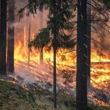 Pavojus miškams: gaisringumas kai kur jau pasiekė stichinį lygį