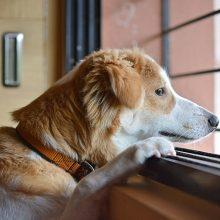 Seimas nesiryžo nustatyti, kiek laiko šuo gali loti