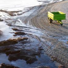 Lenkija dėl dumblių uždarė paplūdimius, Lietuvai grėsmės nėra