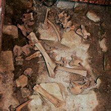 Pasvalio rajone rasti žmogaus kaukolės ir kaulų fragmentai