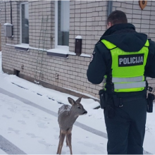 Policijos pareigūnai gelbėjo ir pasiklydusį stirniuką, ir sužalotą šunį