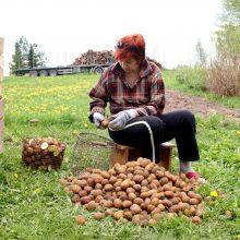 Įspėjimas Lietuvai: smulkiesiems ūkininkams gresia išnykimas