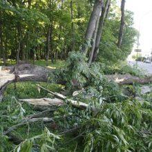 Stiprus vėjas sekmadienį vertė medžius – ugniagesiai kviesti beveik 50 kartų