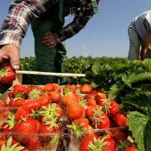 Studijas užsienyje baigęs lietuvis: emigrantai neprisipažįsta sunkiai dirbantys