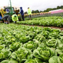 Baltijos šalių ūkininkai kreipėsi į Briuselį