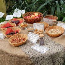 Advento akcentas – Biblijos augalų paroda VDU Botanikos sode