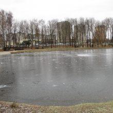 Kalniečių parko tvenkinyje apsigyvenusias gulbes išginė šaltis