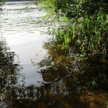 Įšilusiame tvenkinyje Tauragės rajone išplito virusinė karpių liga