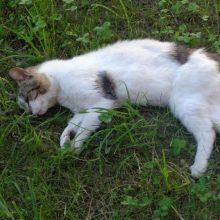 Neįtikėtinas žiaurumas: moteris vieną katiną pakorė, šešis – paskandino
