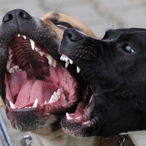 Gydytoja pataria nenumoti ranka į šuns įkandimą