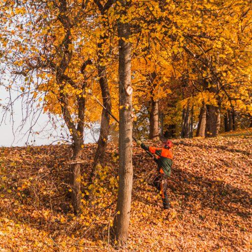 Tvarkomas Jiesios piliakalnis  © Laimio Steponavičiaus nuotr.