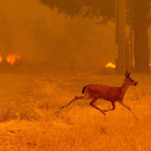 Kalifornijoje siaučia miškų gaisrai  © Scanpix nuotr.