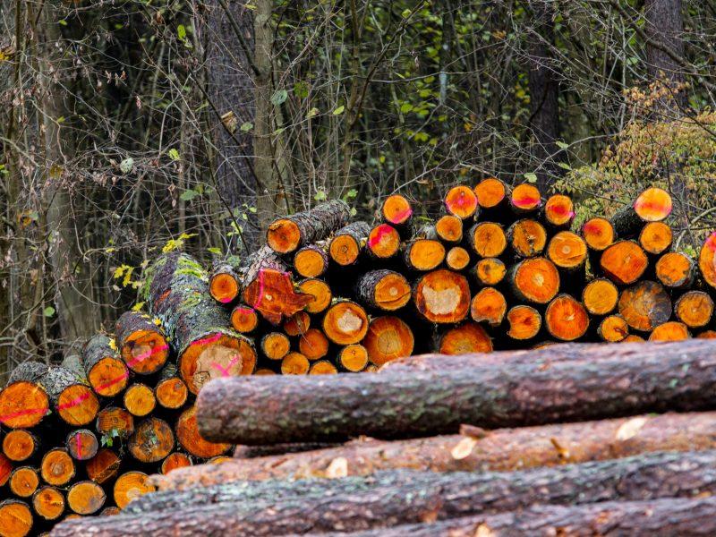 Patvirtinta didesnė miškų kirtimo norma
