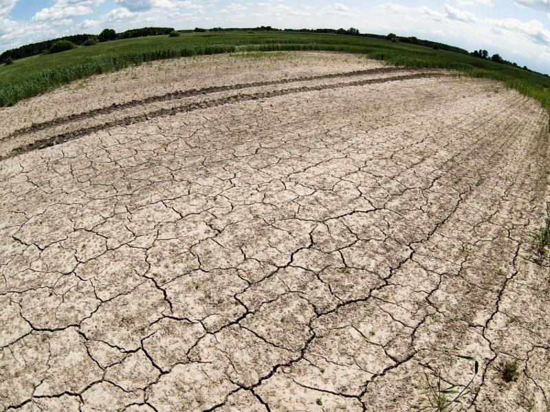 Lietaus nepakanka: stichinė sausra paskelbta dar penkiose savivaldybėse