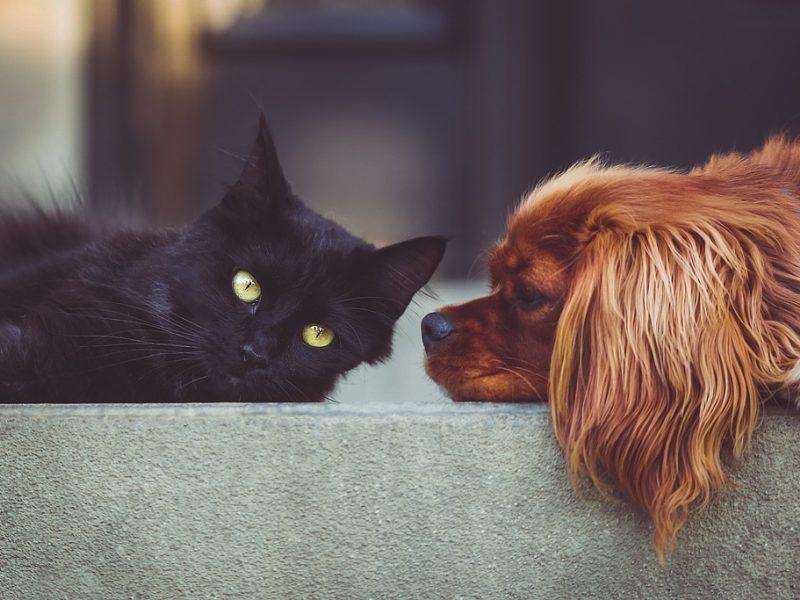 Uždraudžia pardavinėti šuniukus ir kačiukus gyvūnų parduotuvėse