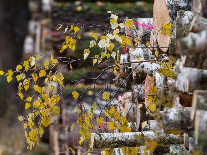 Seimas lipa ant to paties grėblio: gamintojams siūlo pirmumo teise įsigyti medieną
