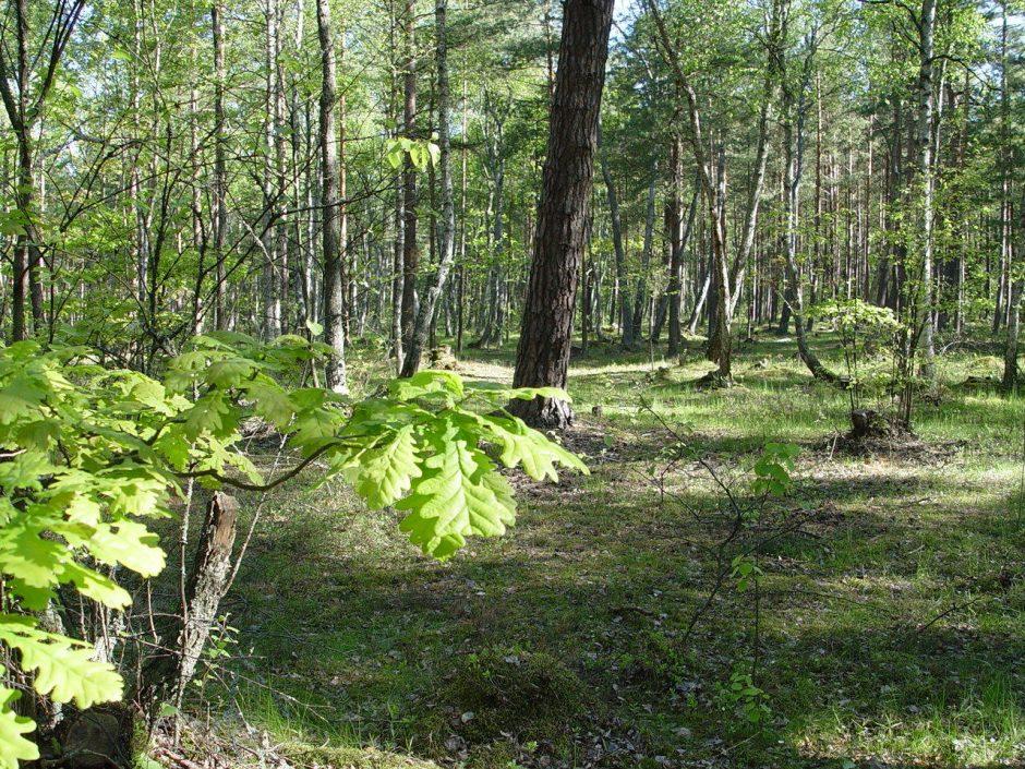 Kauno rajone dingo moteris, dviračiu išvažiavusi uogauti