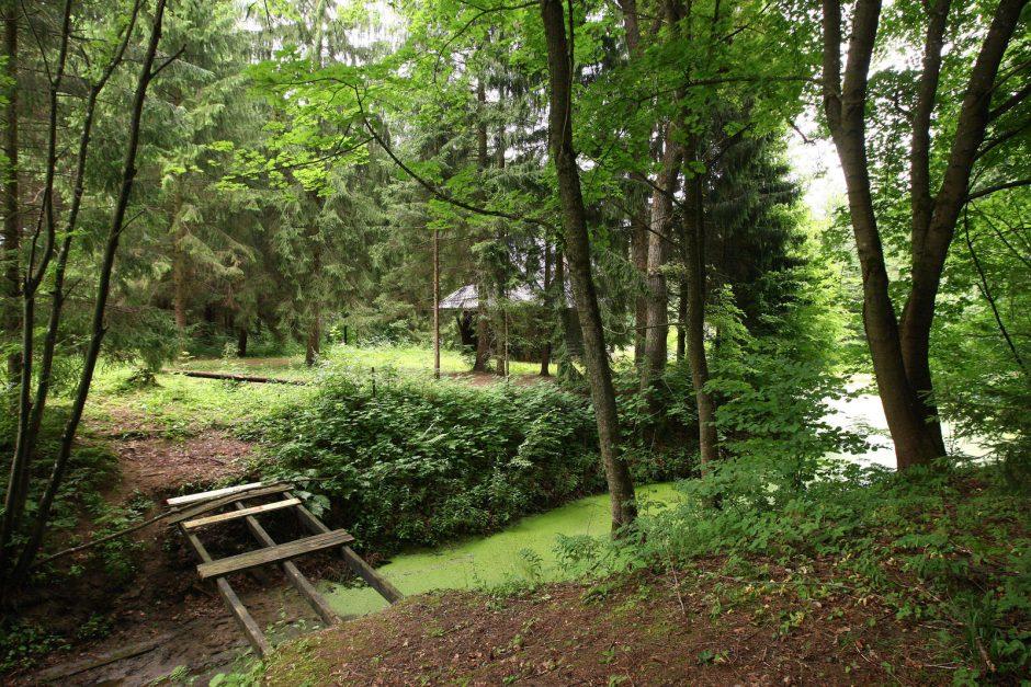 T. Ivanausko įkurtame botanikos sode – bakterine deglige užkrėsti medžiai