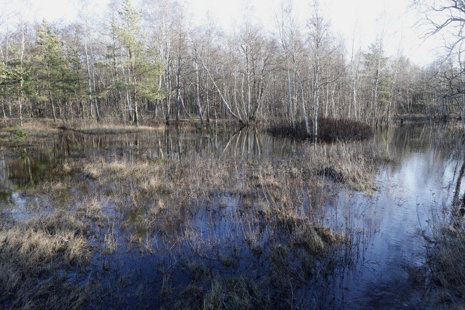 Kopose tyvuliuoja vandens telkinys