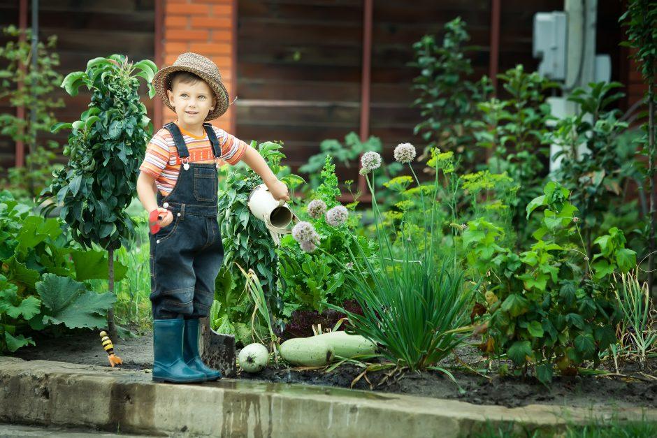 Antras derlius: įpusėjus vasarai, vėl galima sėti