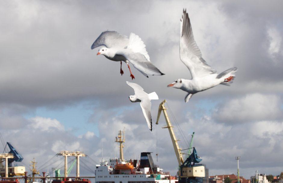 Latvijos premjero vizitas Baltarusijoje gali atsiliepti Klaipėdos uostui?