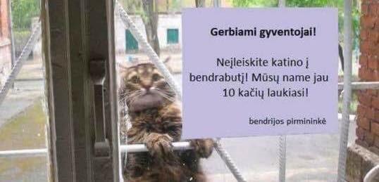 Neįleiskite katino!