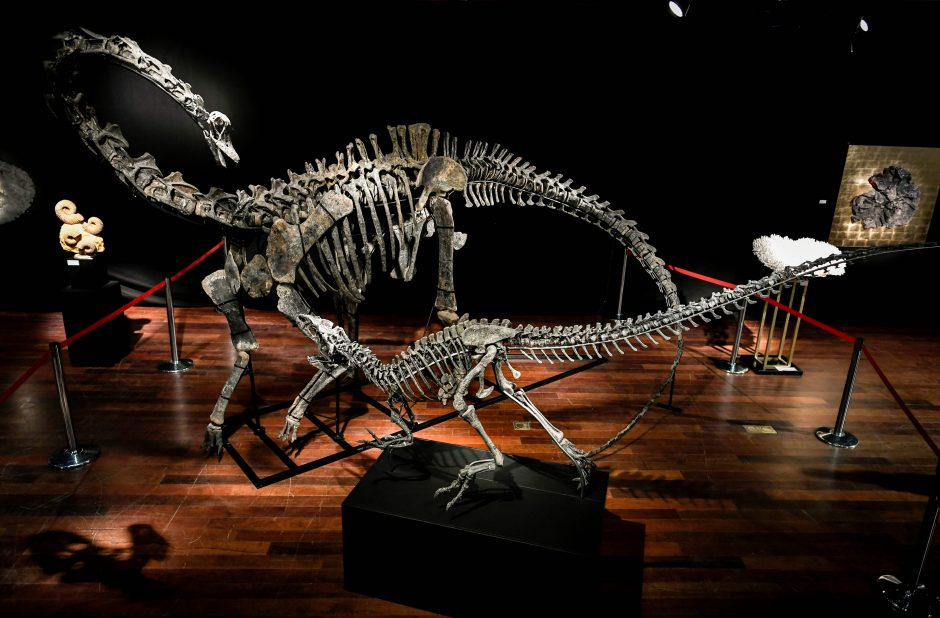 Aukcione parduoti dviejų dinozaurų skeletai – suplotos sumos šokiruoja