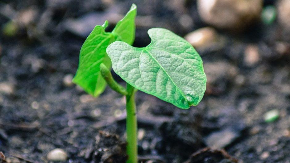 Sėklų sėjos metas: įvardijo, kokias klaidas daro sodininkai