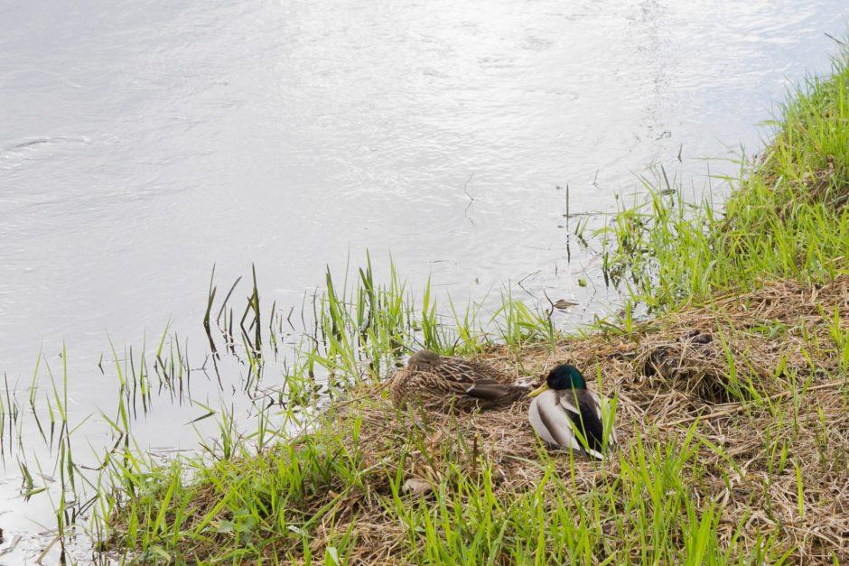 Zarasų rajone iš ežero ištrauktas vyro kūnas