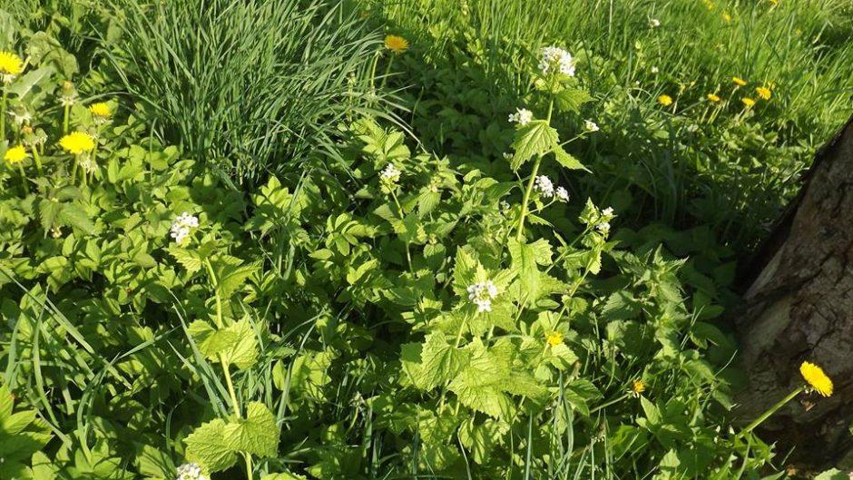 Ūkiai skatinami saugoti natūralią gamtą