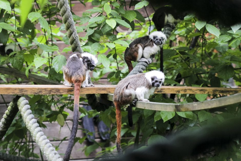 Zoologijos sodui leista laikyti invazinius gyvūnus: yra privalomų sąlygų