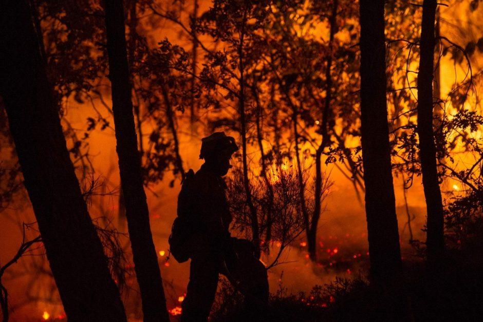Naktinis gaisras Karmėlavoje: išdegė didelis plotas Pilėnų miško