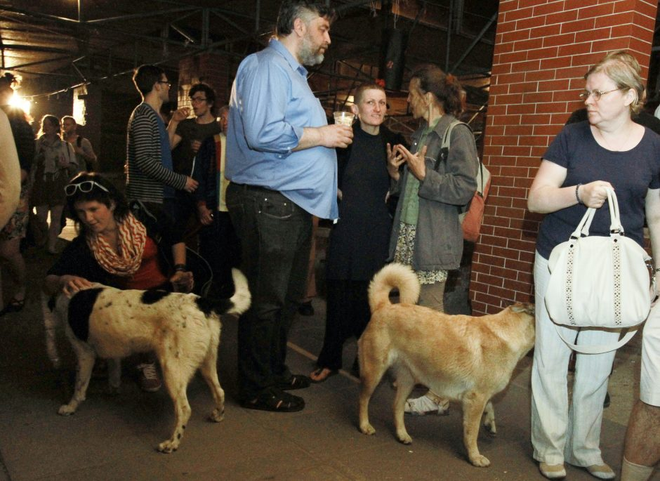 Uostamiesčio gatvėje – kruvina akistata su šunimis