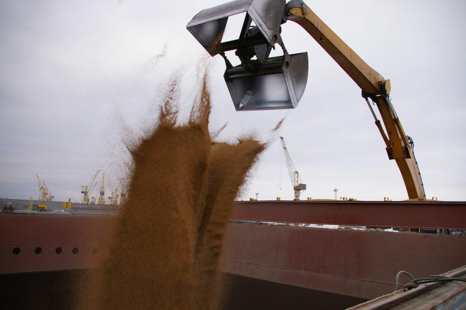 Klaipėdos uoste laukiama grūdų derliaus bumo