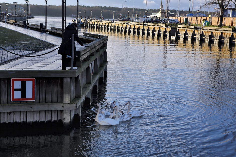 Ekstremalus įvykis: Klaipėdoje nustatytas paukščių gripo atvejis