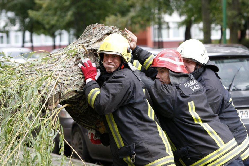 Kretingos rajone ant automobilio užvirto medis