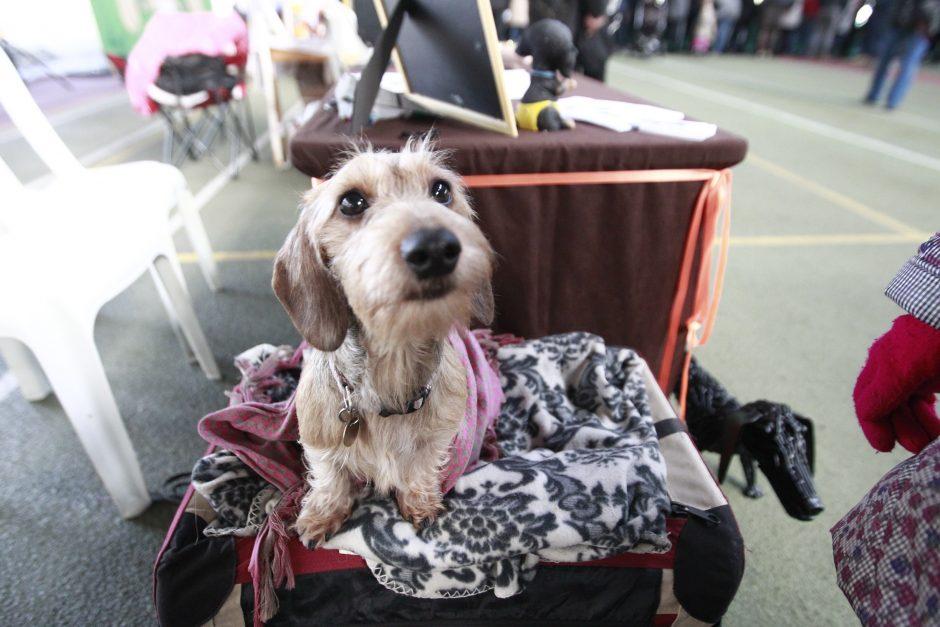 Labdaringos šunų parodos tikslas – vaikų švietimas