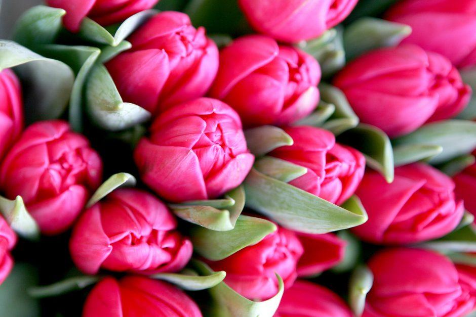 """Šalia Sakurų parko pavasarį pražys """"Rožinio kaspino"""" gėlynas"""
