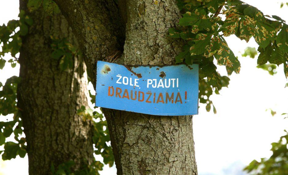 Šienavimo sezonas Kaune kainuos daugiau nei pusę milijono