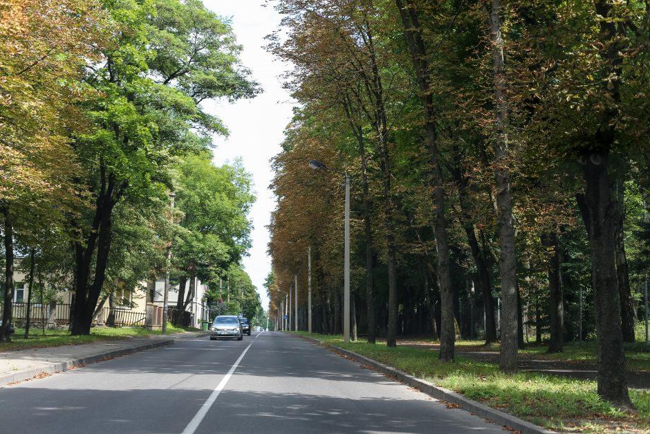 Laistyti iškankintus medžius Kaune – per didelė prabanga