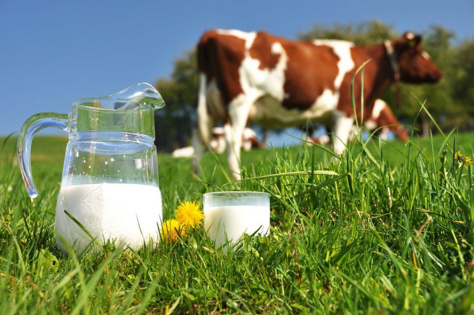 Gamintojai gąsdina: brangs pieno produktai