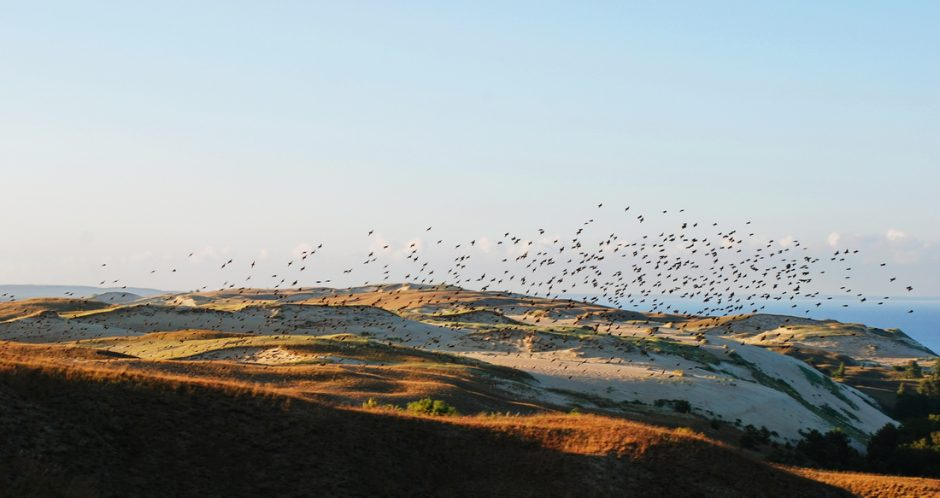 Kuršių nerija – ypatinga vieta paukščiams ir jų stebėtojams