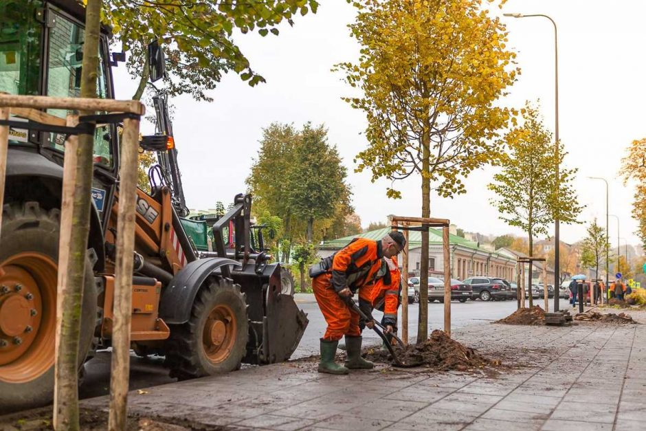 A. Smetonos alėją jau puošia nauji medžiai