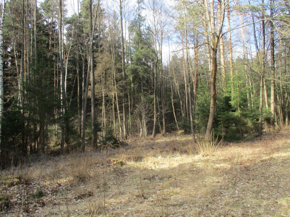 Šiemet jau išdegė miško ploto, prilygstančio 48 futbolo aikštėms